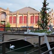 Le cygne remplace les bateaux à fond plat des touristes