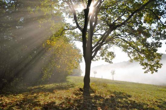 ... les derniers  rayons du soleil de notre balade...