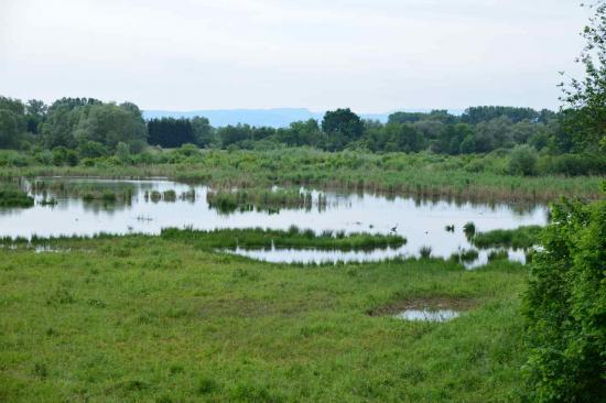 Paysage typique de la réserve naturelle de la petite Camargue